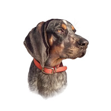 Cute Dog Isolated On White Background. Portrait Of A Handsome Hunting Dog. Hand Painted Illustration. Animal Collection: Dogs. Good For Print T-shirt, Pillow, Pet Shop. Art Background. Design Template