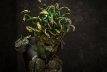 Medusa, Creature Of Greek Myth...