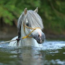 Gorgeous Stallion Swimming In ...