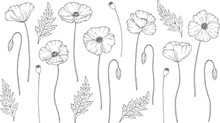Poppy Flowers. Papáver. Stems And Leaves. Big Set Of Elements For Design. Hand Drawn Vector Illustration. Monochrome Black And White Ink Sketch. Line Art. Isolated On White Background. Coloring Page