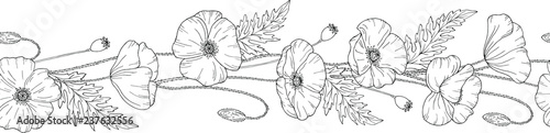 Seamless brush. Seamless border. Poppy flowers. Papáver. Stems and leaves. Hand drawn vector illustration. Monochrome black and white ink sketch. Line art. - 237632556