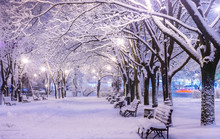 Amazing Winter Night Landscape...