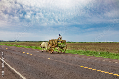 Spoed Foto op Canvas Zuid-Amerika land A local Paraguayan transports sugarcane with his ox cart.