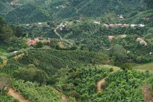 Plantation And A Small Village...