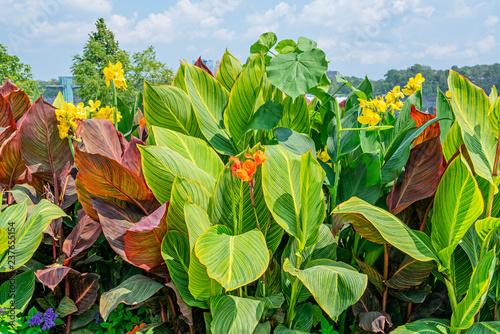 Valokuva  Flowers Leaves & Sky