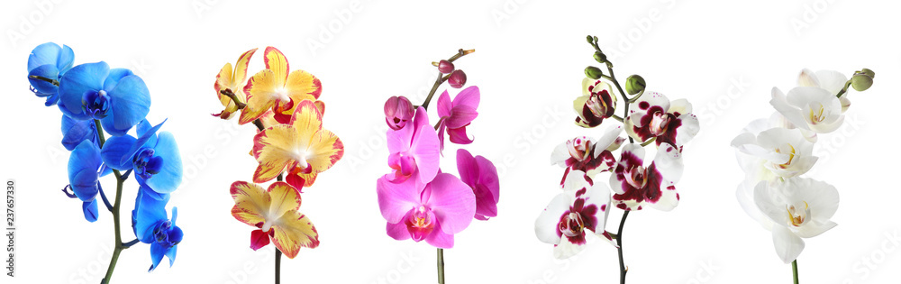 Fototapety, obrazy: Set with different color orchid flowers on white background