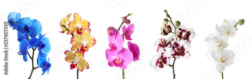 Set with different color orchid flowers on white background