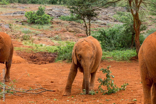 Photo  One baby elephant in the David Sheldrick Wildlife Rescue