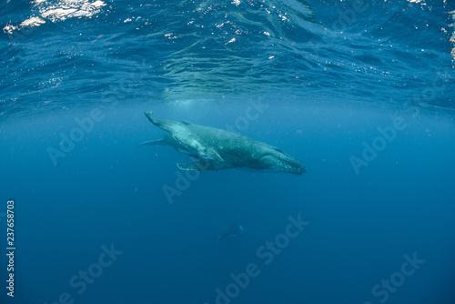 In de dag Dolfijn Humpback Whale