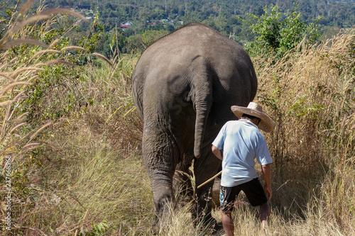Photo  The Elephants