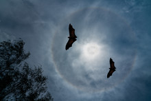 Full Moon Halo Flying Bats At ...