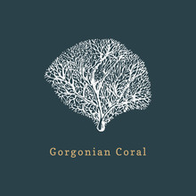 Gorgonian Coral Vector Illustration. Drawing Of Sea Polyp On Dark Background.