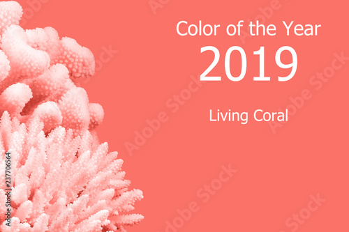 Living Coral color of the Year 2019. Trendy color. Fototapete