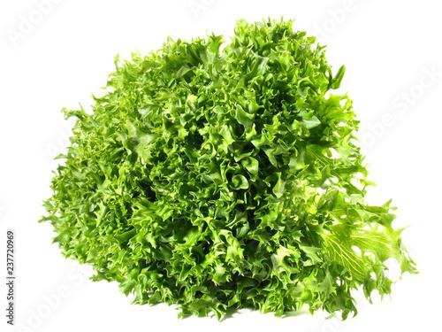 Krause Endivie - grün