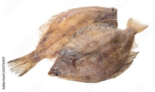 Canvastavla fresh raw fish flounder
