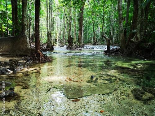 Cadres-photo bureau Rivière de la forêt mountain river in the forest