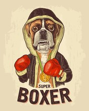 Dog Boxer Dressed In Human In ...