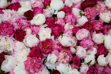 Flowers Of Pink And White Peonies
