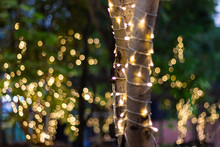 Blur - Bokeh - Decorative Outd...