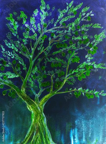 Obraz na plátne Green fruit tree with blue background