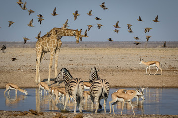 A gathering of african animals at a waterhole