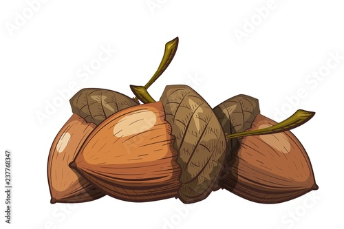 Photo Group of acorns in the shell on a white background