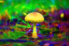 Forest Poisoning Mushroom Clos...
