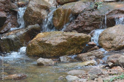 Foto auf Gartenposter Forest river CS 0423