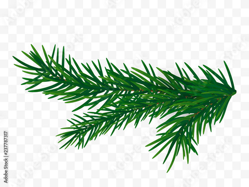 Stampa su Tela Christmas tree branch. Fir branch isolated.