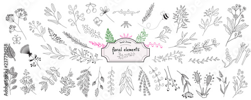 Fototapeta Hand drawn collection of rustic and floral design elements. Tree branches, flowers, plants and leaves ink silhouettes. Isolated vector on white background obraz