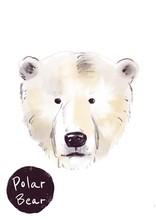Polar Bear Head Illustration