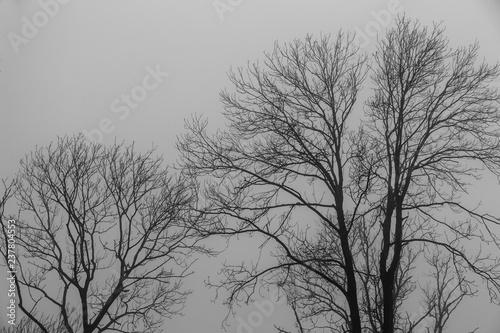 Lövskog i dimma en höstdag