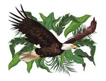 Wild Eagle Body Cartoon