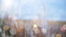 갈대 풍경 전경을 카메라 모션 블러 효과 처리 카피 공간 이미지
