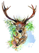 Forest Deer Family Hand Drawn Watercolor Illustration Set