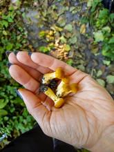 Little Fresh Mushrooms