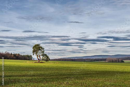 Valokuva  Baum im Feld im Burgenland (A)