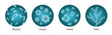 Bacteria Viruses Ameba Yeast I...