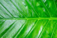 Fresh Green Background. Vegeta...