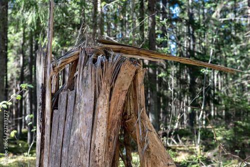 Aluminium Prints Mills old dry tree trunk stomp texture with bark