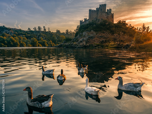Valokuva  Geese on the background castle of Almourol, an iconic Knights Templar fortress built on a rocky island in the middle of Tagus river