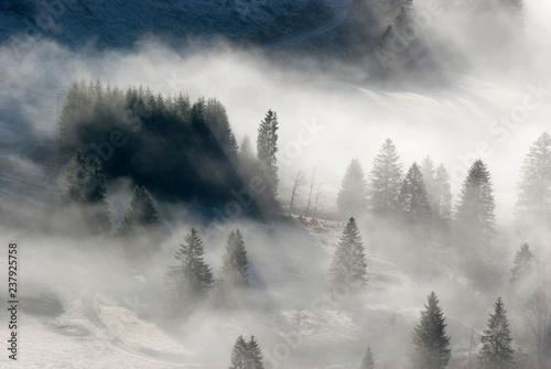 Garden Poster Forest Nebelstimmung im Schwarzwald