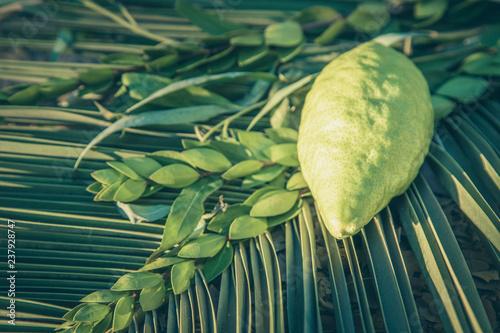 Fotografie, Obraz  Jewish festival of Sukkot