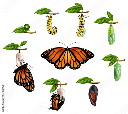 Fototapeta  Life Cycle Of Butterfly Realistic Set