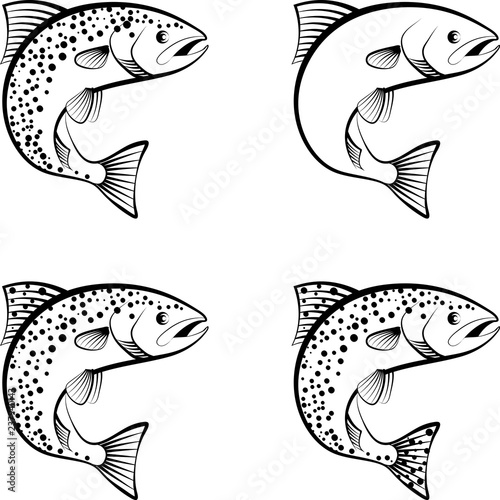 Fotografia salmon and trout - clip art illustration