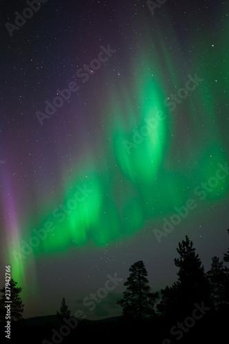 Vászonkép Aurora Borealis above northern taiga forest
