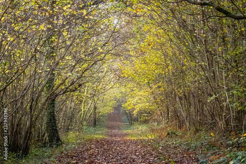Fotografía  Woodland