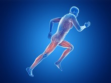 Illustration Of A Jogger's Mus...