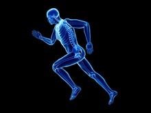 Illustration Of A Jogger's Skeleton