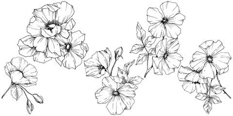 Wektor Rosa canina kwiat. Czarno-biały grawerowany atrament. Odosobniony rosa canina ilustracyjny element.